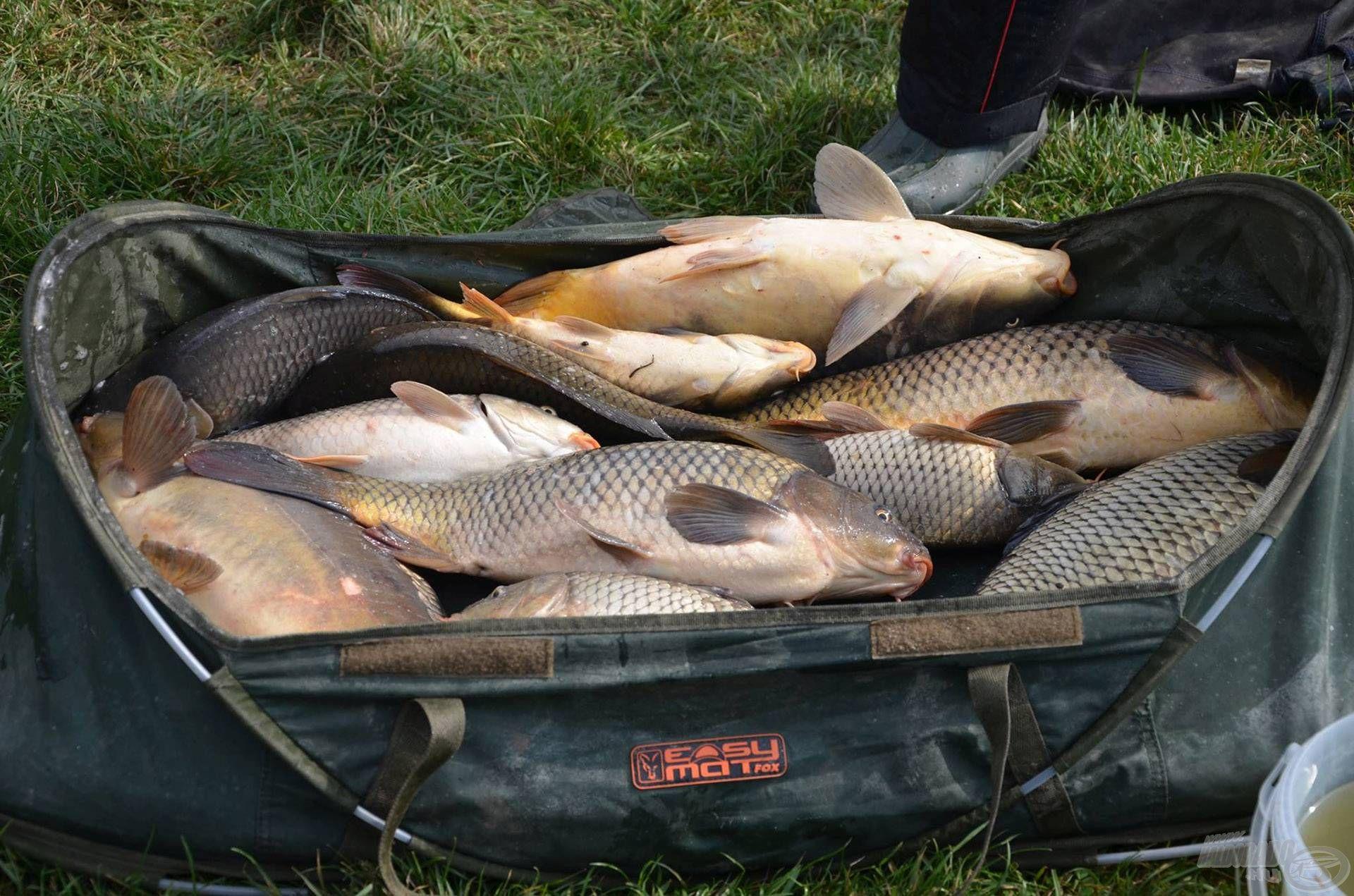Az ősz a nagyhalas szezon, így bízunk benne, sok ilyen terítékfotó készül majd a mérlegelésekkor