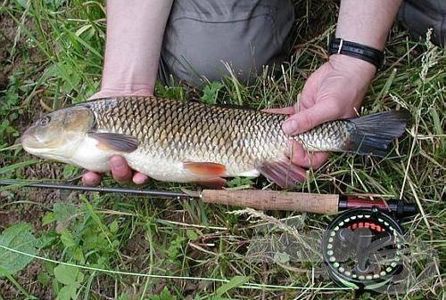 A legyező horgász álma