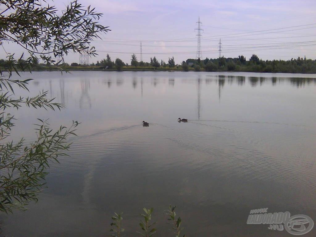 A tó és a kacsák