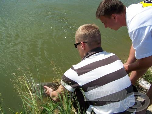 Természetesen a különleges élményhez hozzátartozik a sportszerű horgászat elengedhetetlen eleme, a kíméletes visszaengedés!