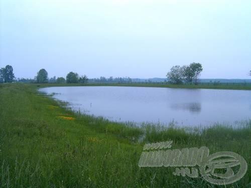 Természetszerű szaporítás a sekély tavakban