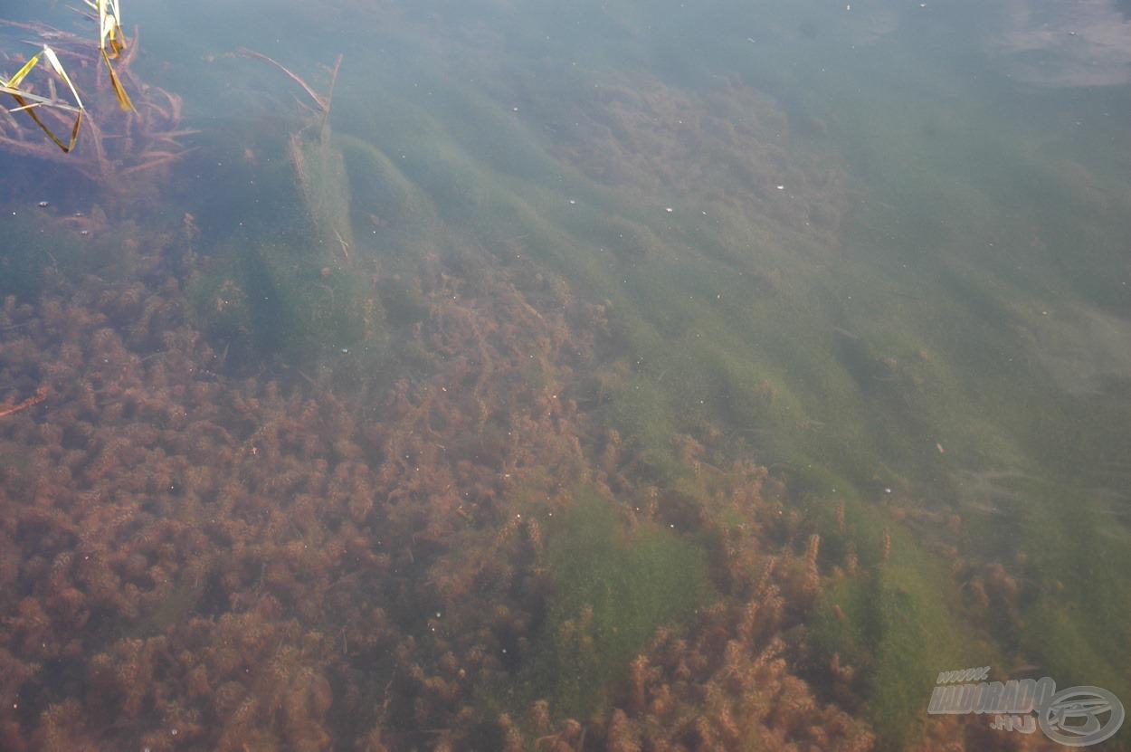 A part előtti 4-5 méteres sávot sűrű növényzet borította