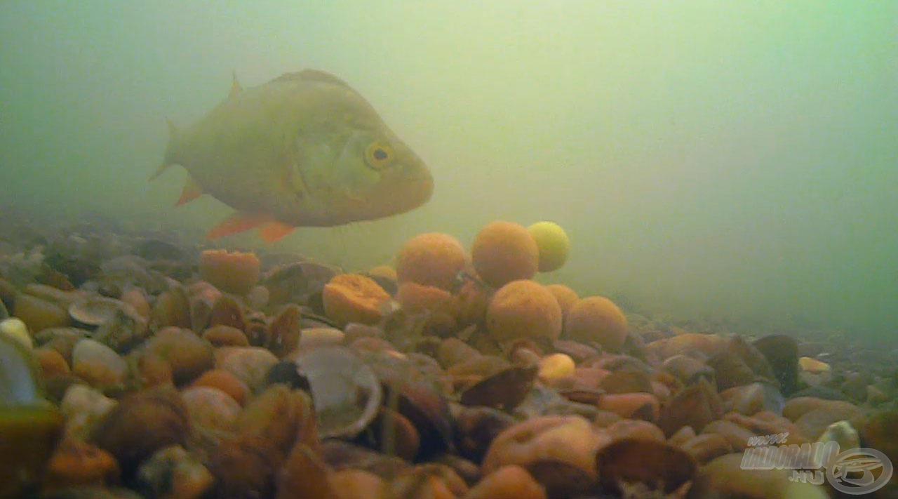 Egy víz alatti pillanatkép akció közben