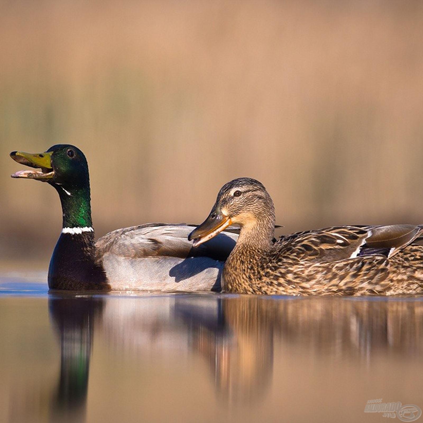 Természetvédelem