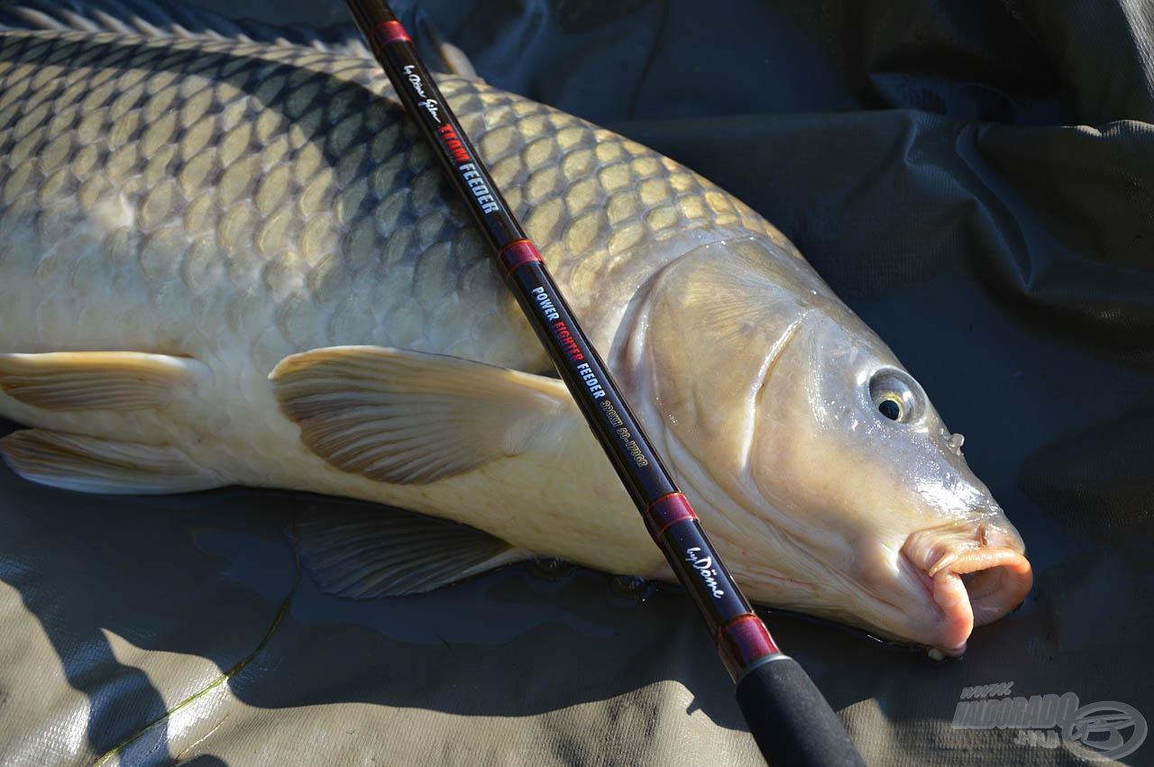 A legvadabb, legharcosabb halak erejét is hatékonyan őrli fel a botok karaktere