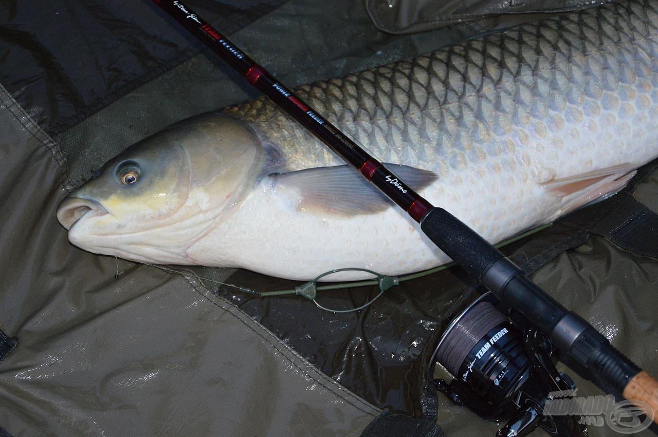 A termetes pontyok és amurok horgászata során kamatoztathatjuk leginkább a botban rejlő nem mindennapi lehetőségeket