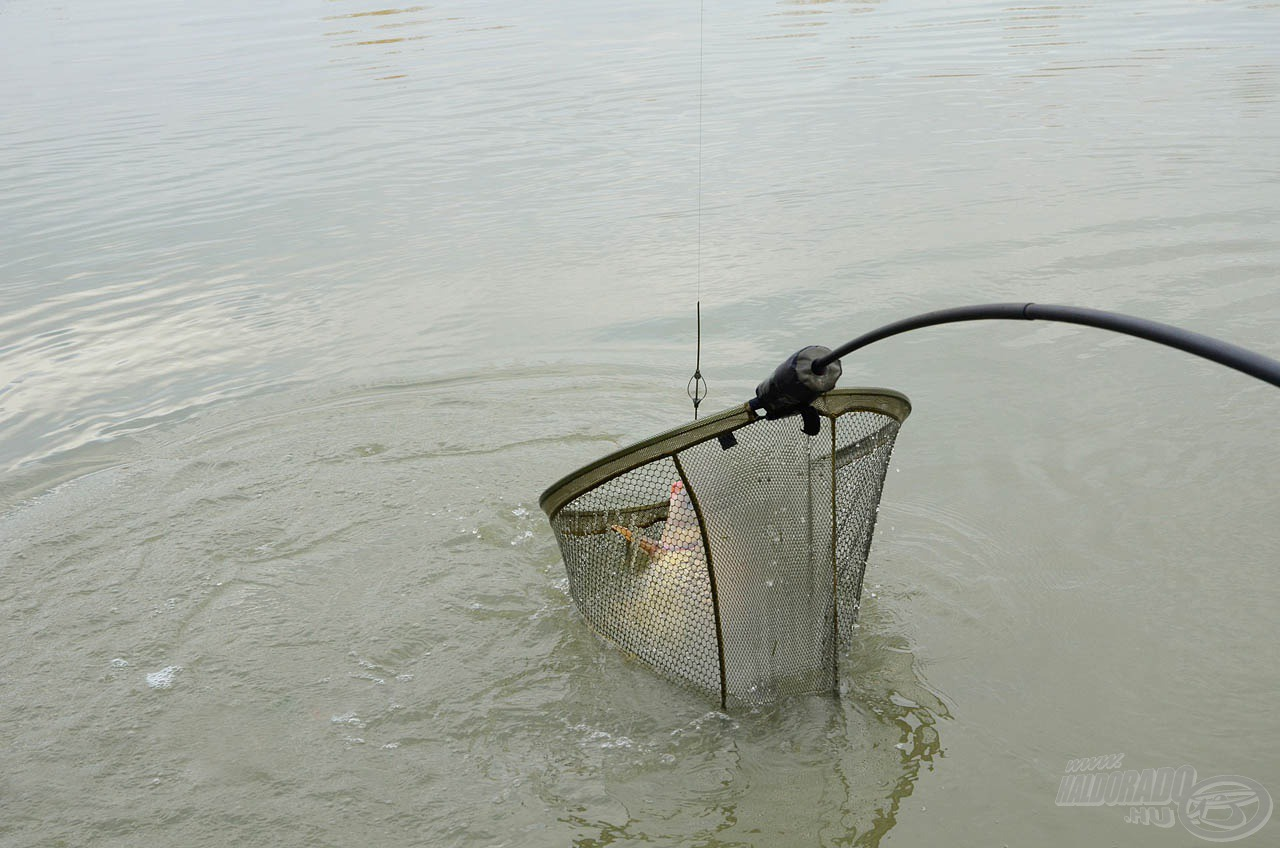 … végül merítőbe került az első hal!