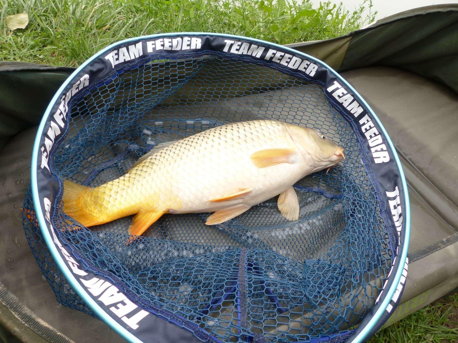 A feederbotos horgászat nem ismer határokat…