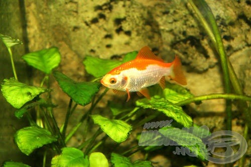 Színpompás halakkal is benépesíthetjük az akváriumot…