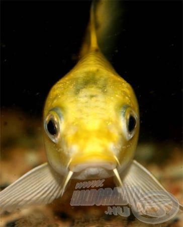 Akár nap mint nap szemezhetünk a kedvencünkkel az akvárium üvegén keresztül