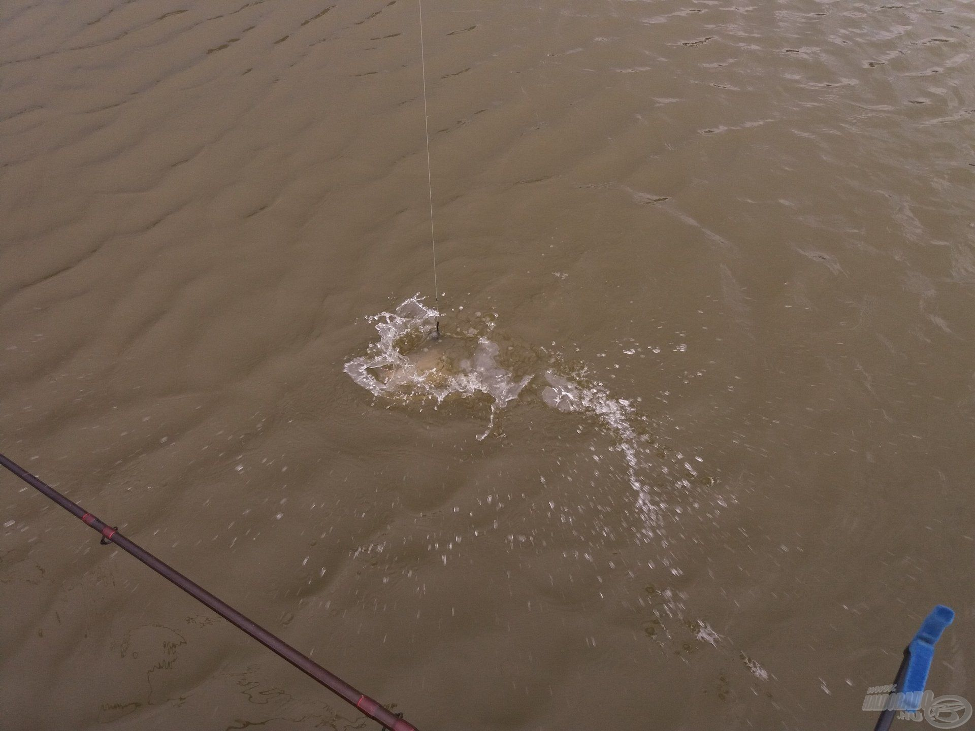 Jó erőben voltak a halak