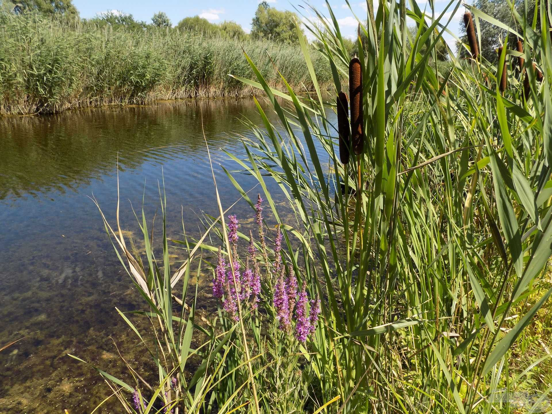 A tó mögött elhelyezkedő kanális biztosítja az ideális vízszintet egész évben, és nem utolsósorban halnevelőként is funkcionál