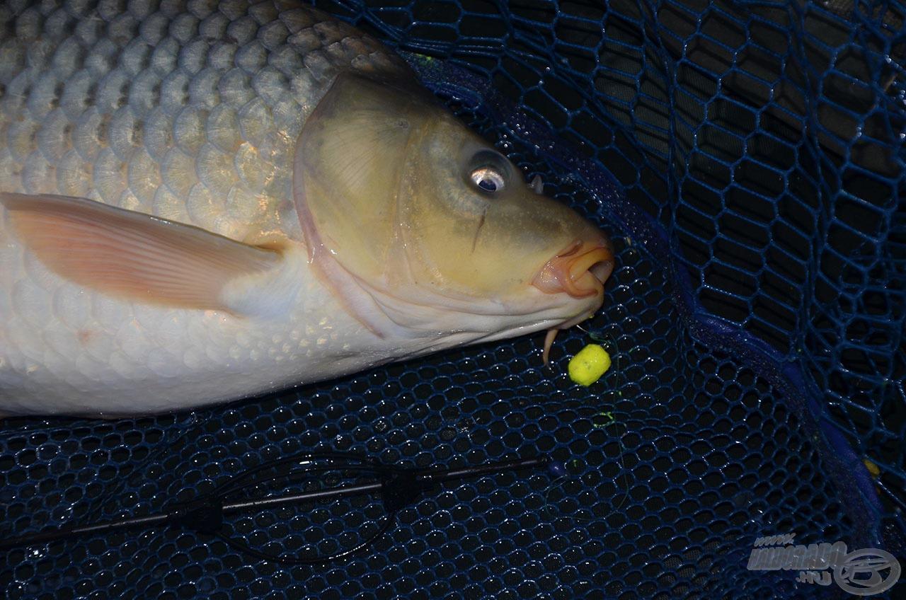 … de ha nem volt kapás ennyi idő alatt, akkor a következő dobásoknál akár 40-60 percet is várjunk, hogy kiderüljön, mi kell a halaknak!