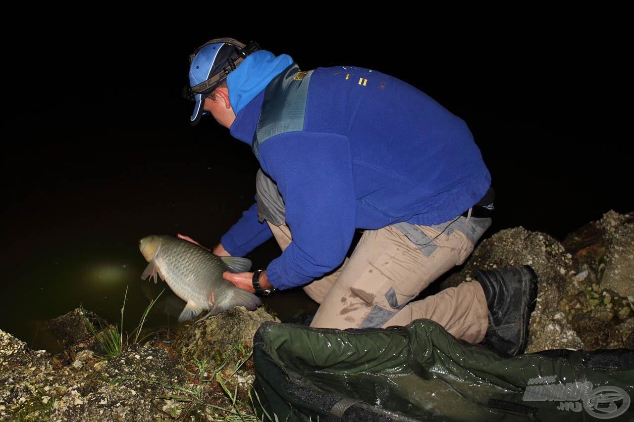 Szerencsére az éjjel ez volt a gyakoribb, Tomi itt éppen az egyik amurját engedi vissza, vigyázva, nehogy az megsérüljön a kövek közt