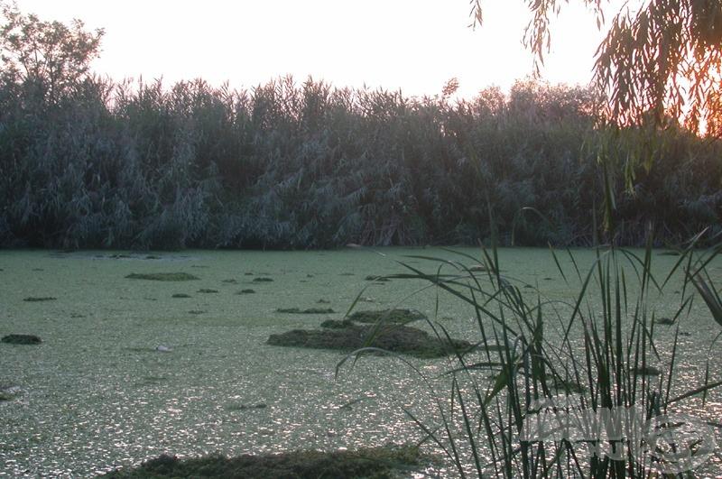 A mezőgazdaságban a műtrágyázás okoz óriási károkat. Íme, egyik mellékhatása. A vízben abnormális módon megszaporodott a rucaöröm és hínár, a vízfelszín láthatatlanná vált!