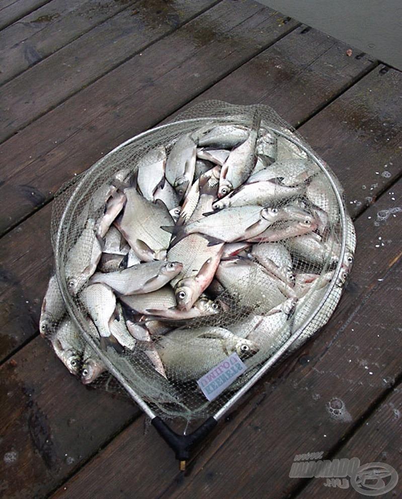 Eleve C&R horgászatot tervezve ilyen célból nem lesz szabad a megfogott halakat összegyűjteni. A halak szempontjából jobb is így!
