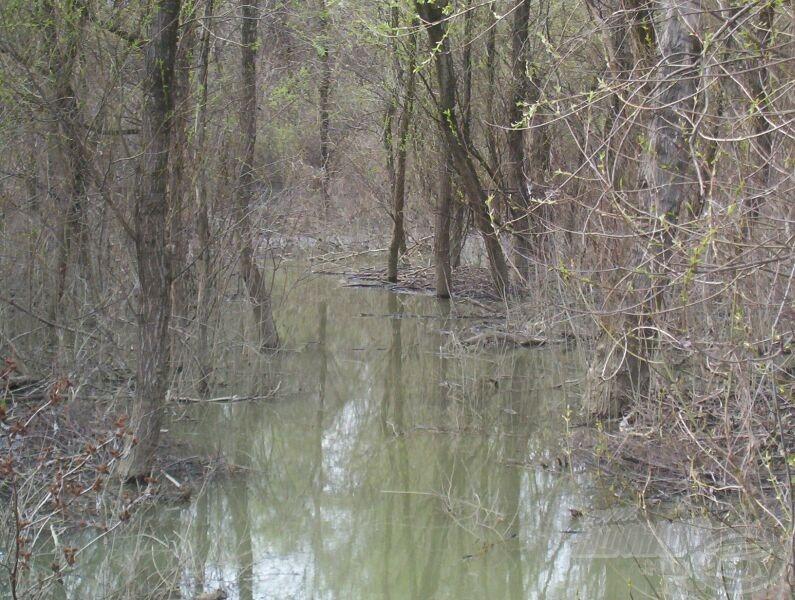 Halaink ugyanúgy közlekednek az elöntött erdőben, mint mi, ugyanúgy követik a nyiladékokat, az utakat, ösvényeket
