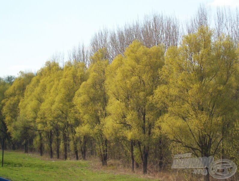 Megújulnak a fák