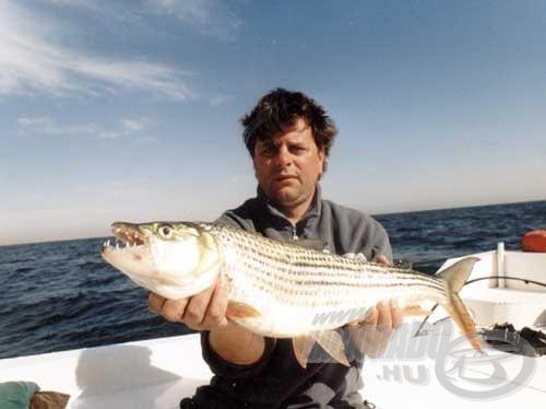 A tigris lazac a Nasszer-víztározó egyik jellegzetes hala