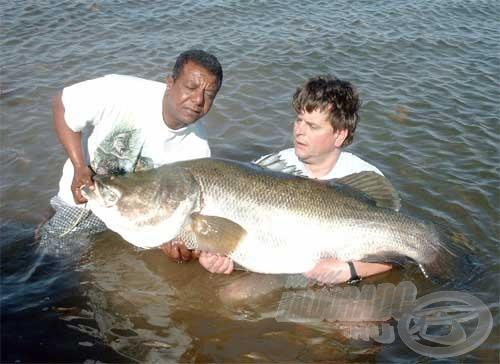 A túra legnagyobb, 60 kg-os sügere