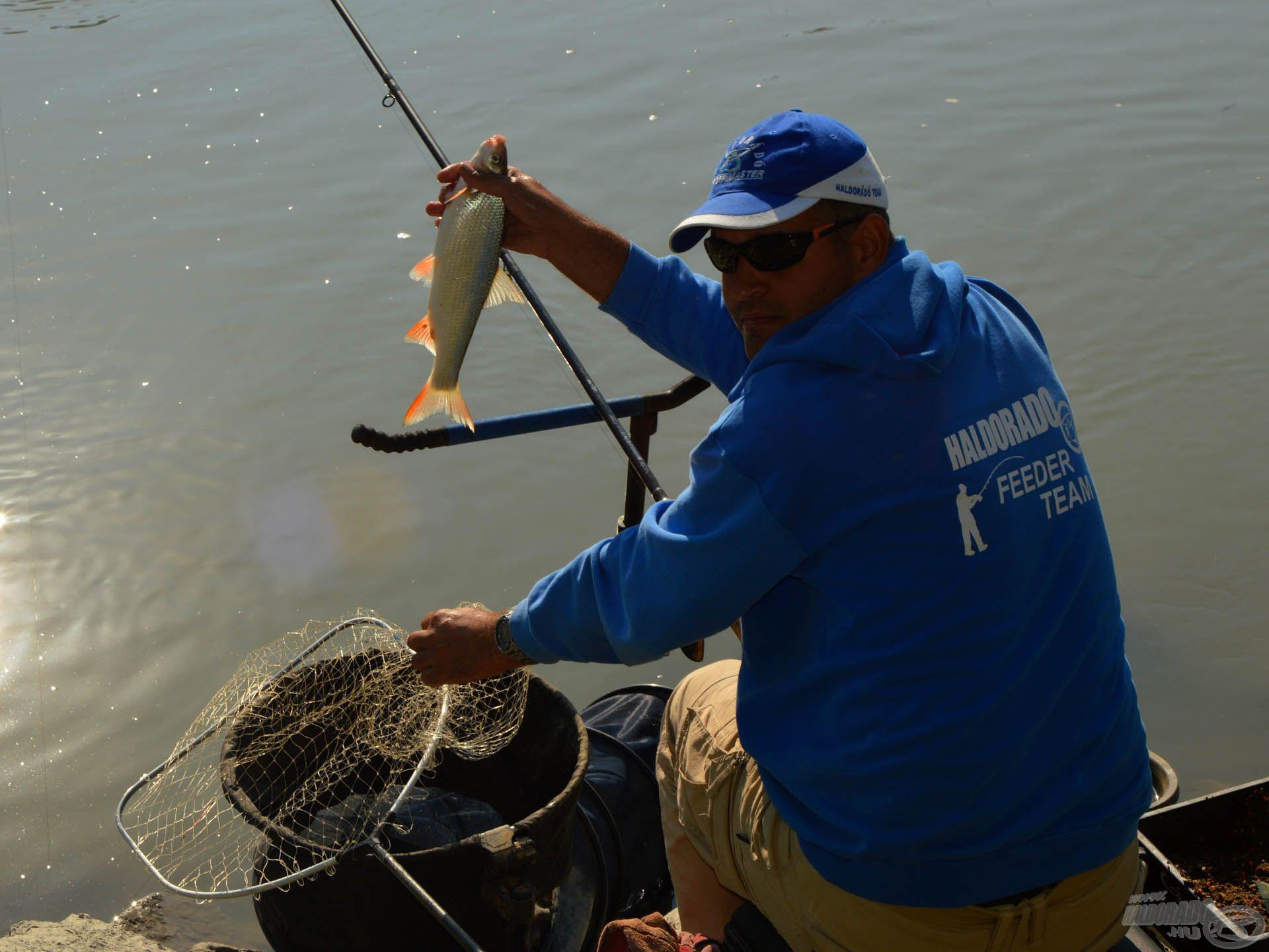 A leggyakoribb hal a paduc volt. A kicsi, 30 dekástól…