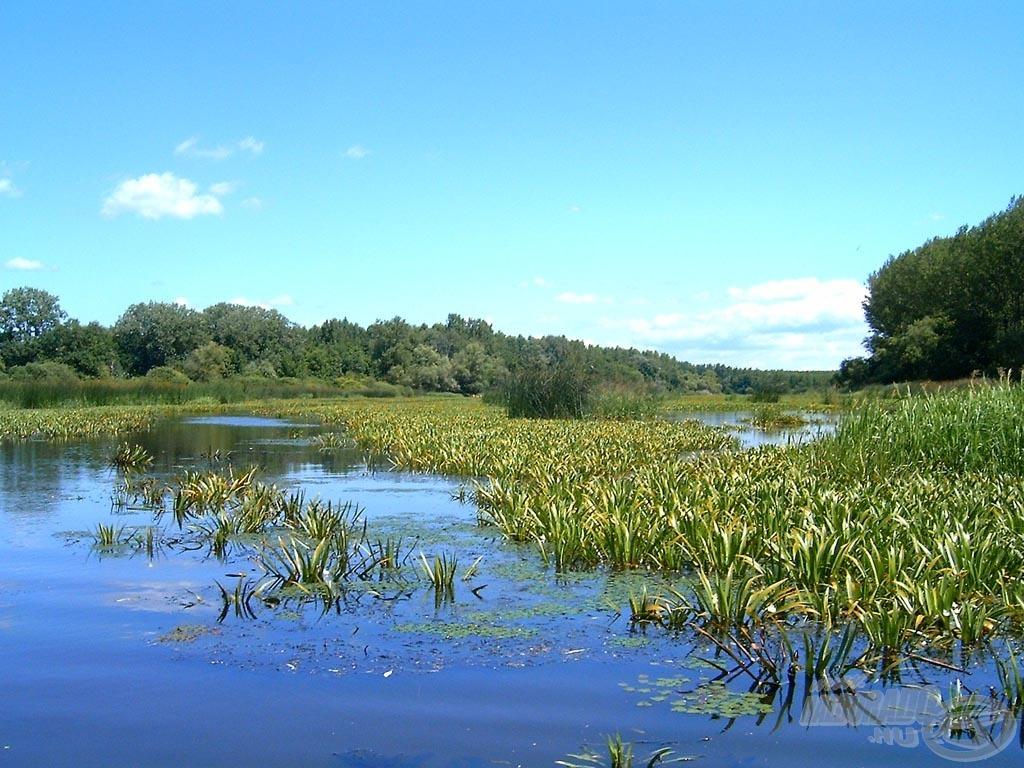 Műsoraiban elkalauzolja Önöket a legszebb magyar horgászhelyekre, legyen az folyó, tó, holtág, napijegyes horgásztó