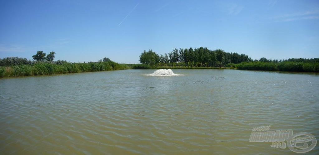 A harcsás tó számos ragadozó halat rejt