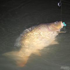 Bojlis horgászat