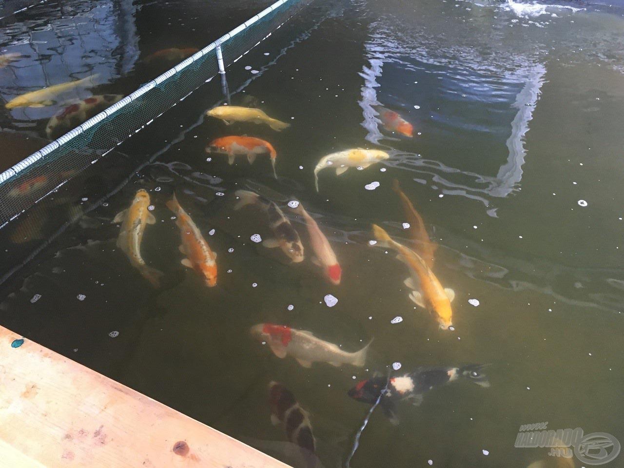 … ahol a több száz kisebb-nagyobb medence különféle halait vehettünk szemügyre