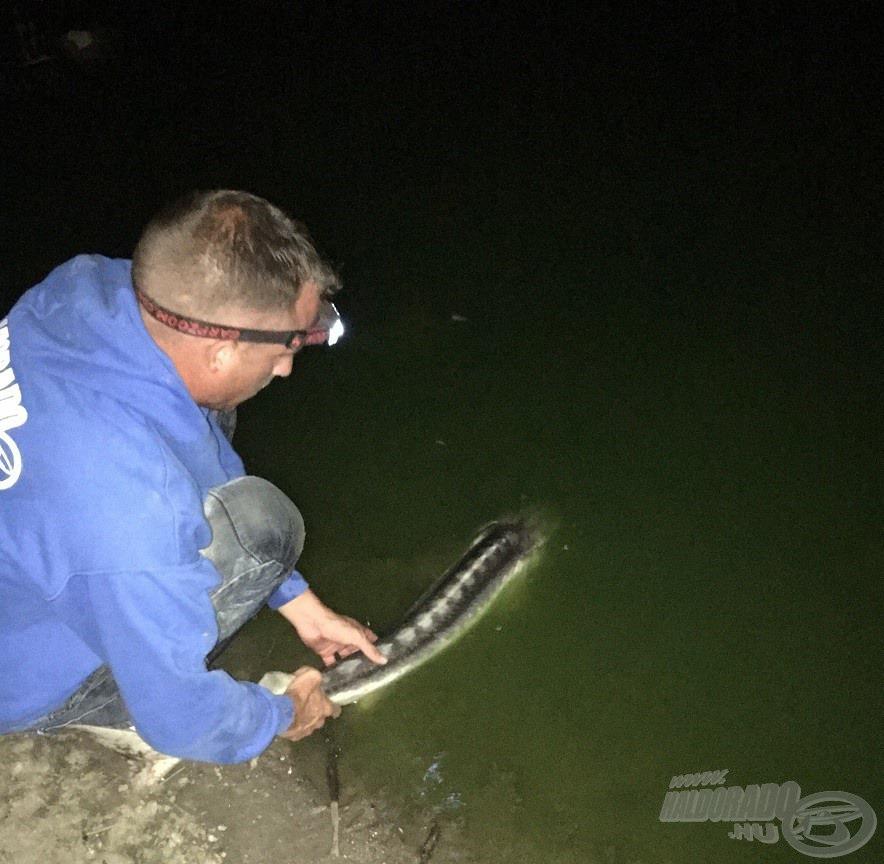 Elkelt a fejlámpa a sötétben, míg halamat némi ringatózás után szabadon engedtem…