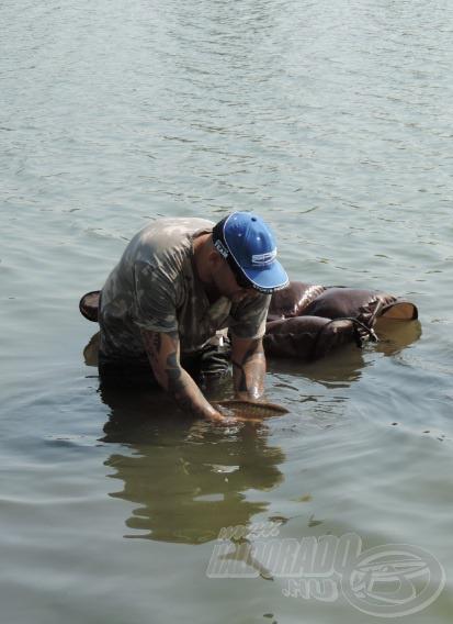 Pikkelyes barátom hamar újra erőre kapott és gyorsan visszaúszott a tó közepe felé