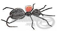 Whitlock\'s Bright Spot Carpenter Ant