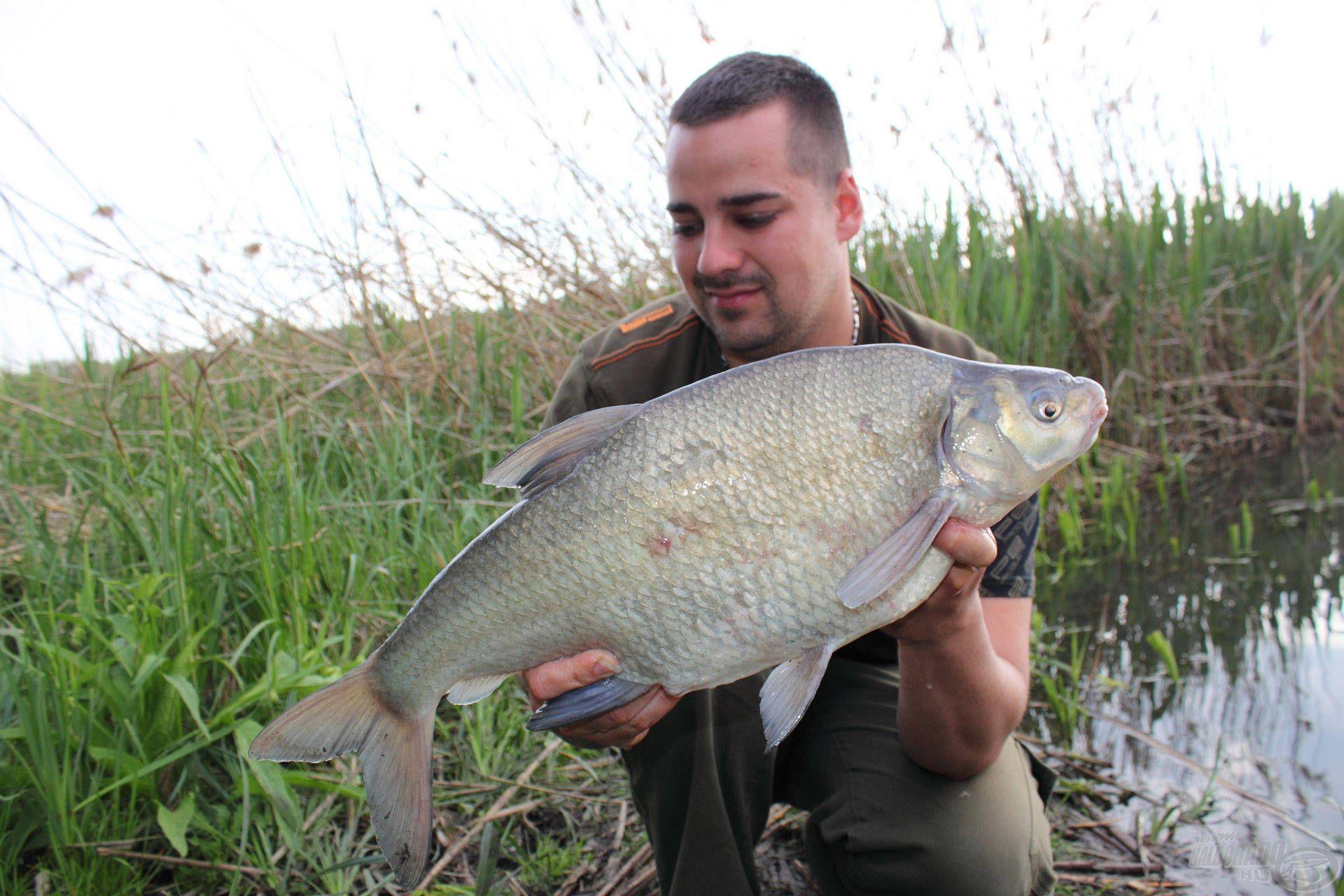 Az ilyen méretű dévérkeszegek megnehezítik a bojlis horgászatot, de egy kis ügyességgel kikerülhetők