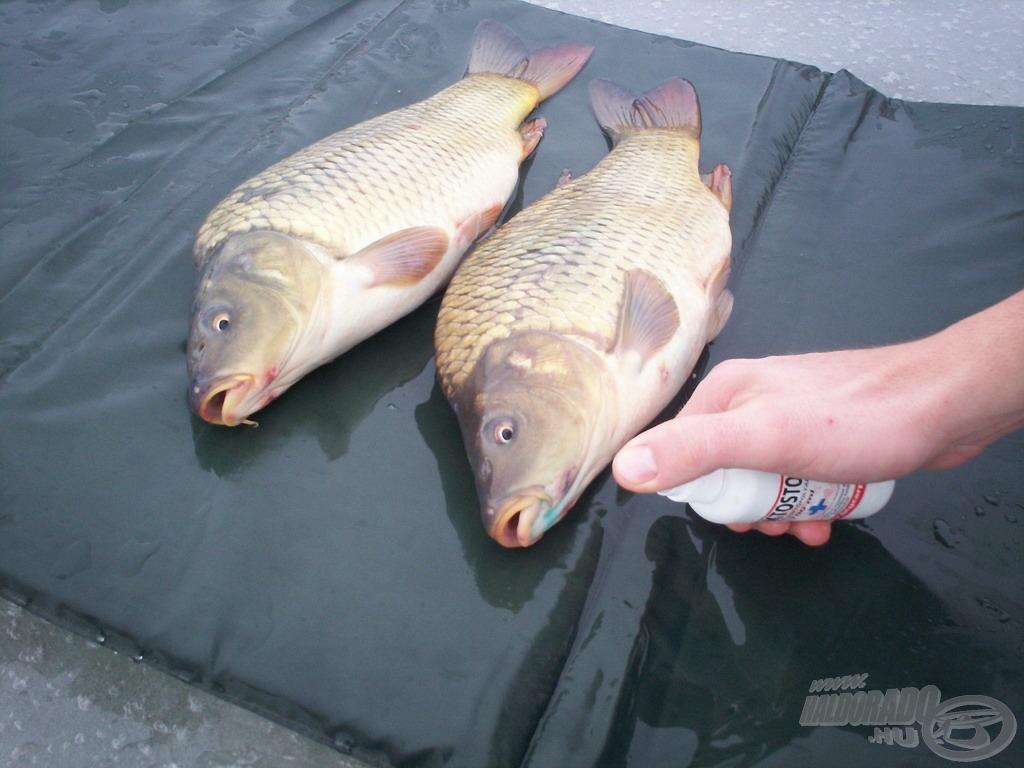 A halakkal való kíméletes bánásmód ekkor is kötelező!