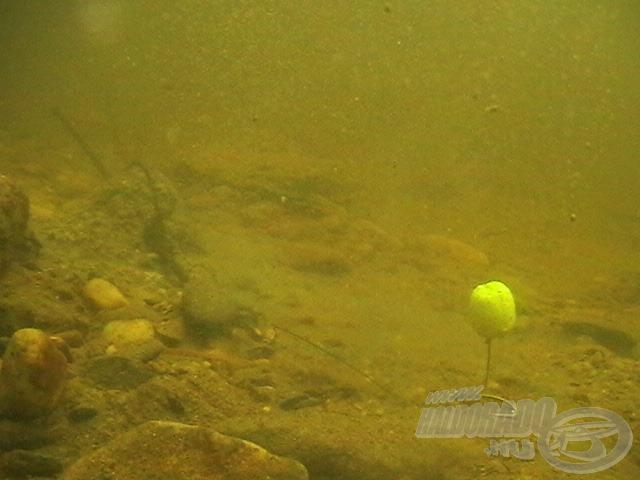 Látszódik, hogy a Fluo Pellet csali a víz alatt is mennyire rikító. Ezt biztos meglátják a halak!