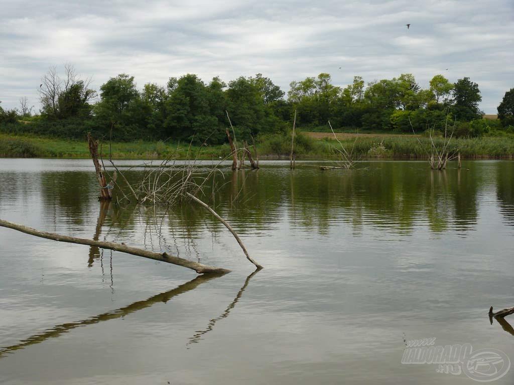 A Hársasberki-víztározó felső része igazán vadregényes terület