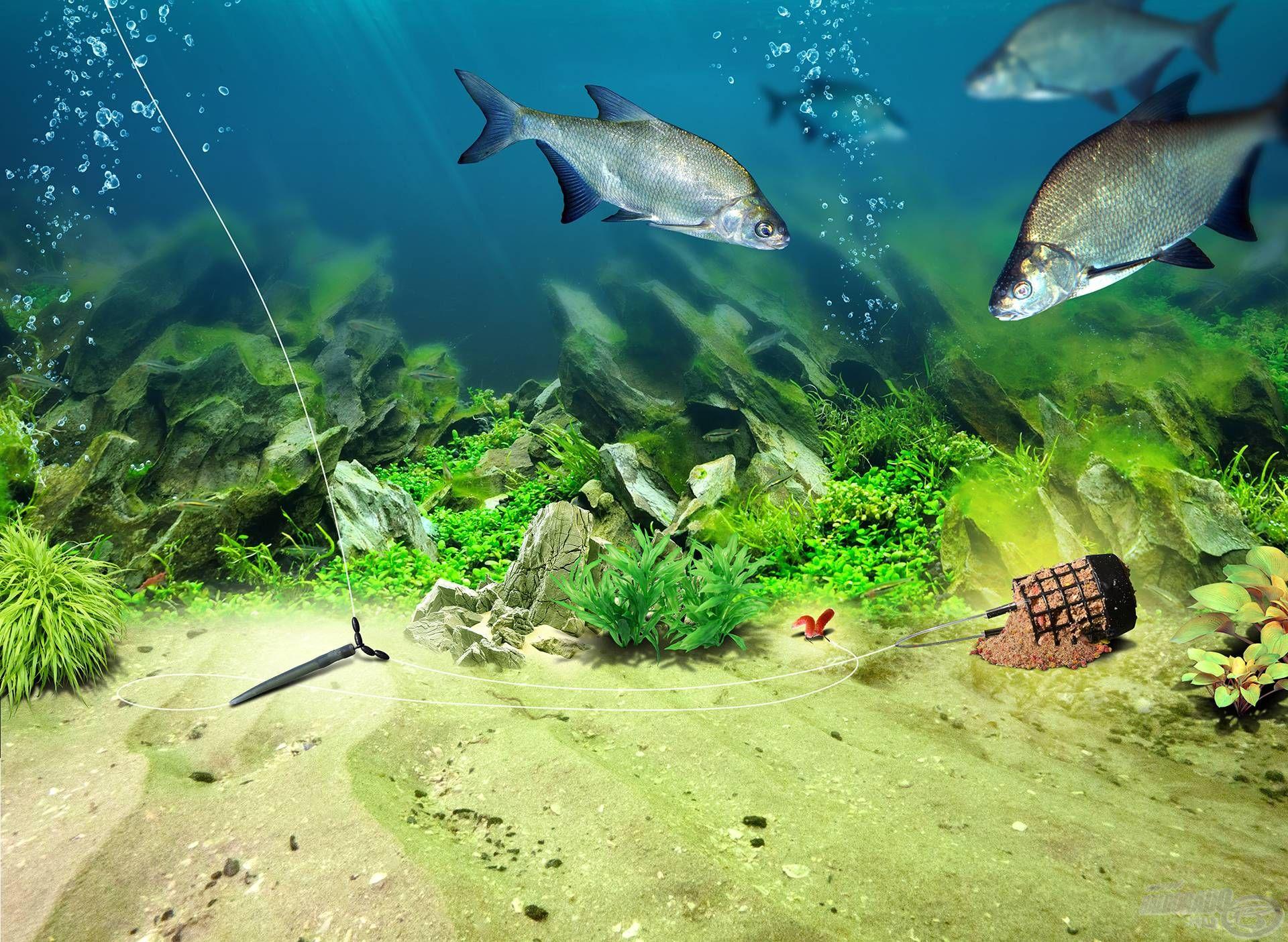 Az újdonság erejével hatott a halakra is!