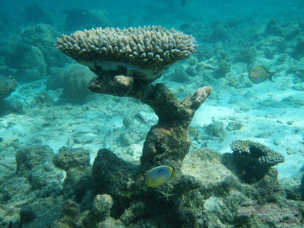 Víz alatti világ Maldívon